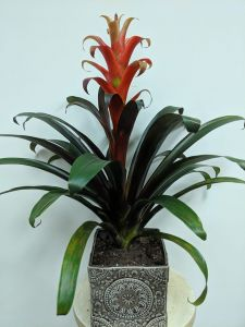 Bromeliad in Ceramic